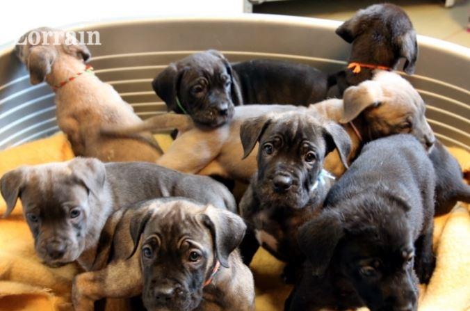 Vente d'animaux interdite pour les particuliers : fini l'argent facile !