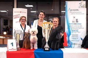 Résultats du 30ème Championnat de France de Toilettage et d'Esthétique canine et féline