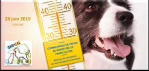 Communiqué SNPCC : Transport des animaux en période de canicule